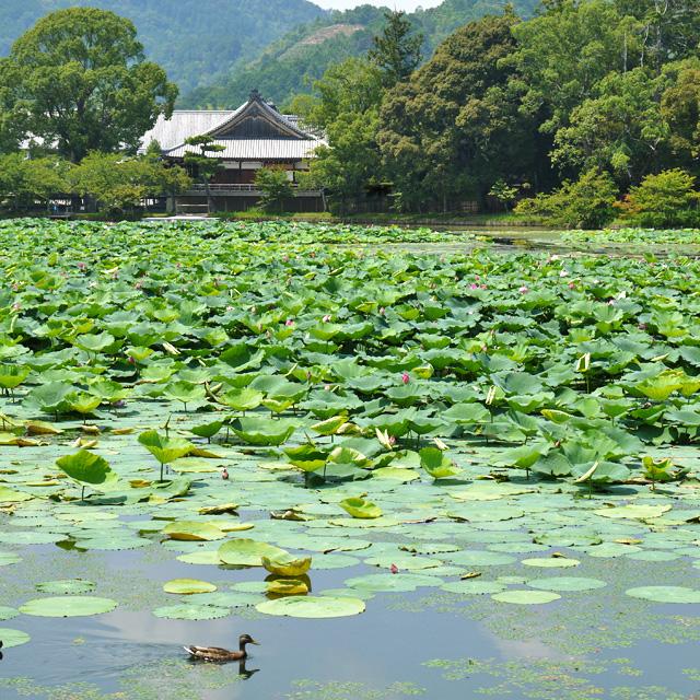 大覚寺大沢池の写真