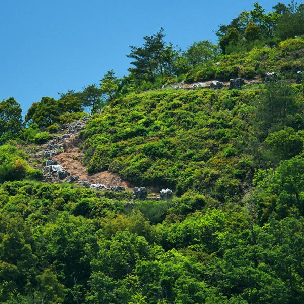 紙屋川の河岸段丘から見る左大文字の写真