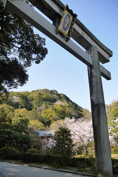 男山(鳩ヶ峰)